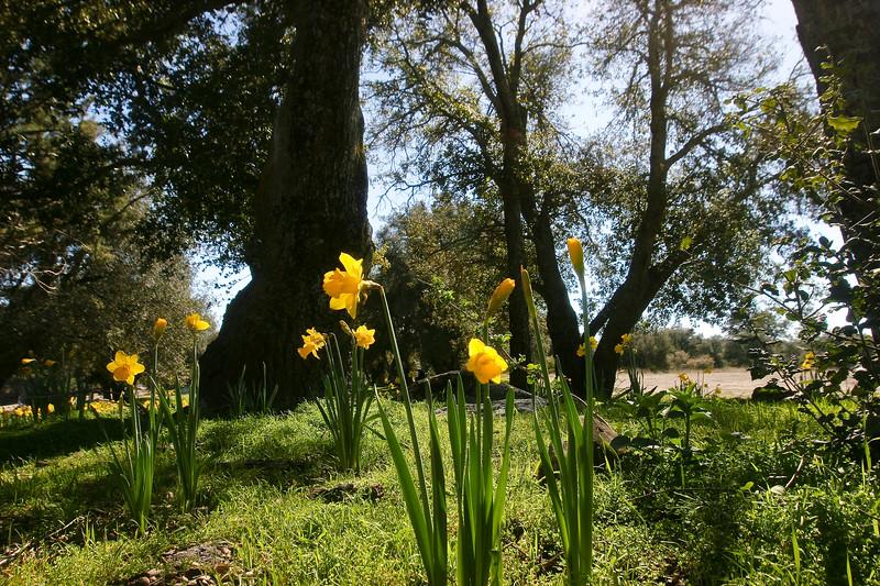 Flowers in a field near Julian