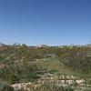 Lush green desert!