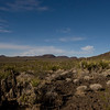 Near the Cima Lava fields.
