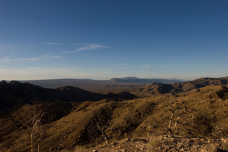View looking northeast from Mid Hills campground.  Cima Dome is just barely visible to the far left in the distance
