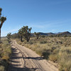 My favorite part of the desert.  Elevation 4200 feet, lots of Joshua Trees and large Cholla catcus, lush green grasses