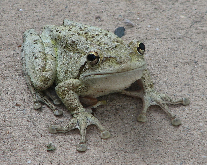 Kiss me, you fool! I am really a prince of a frog (or am I a toad?).