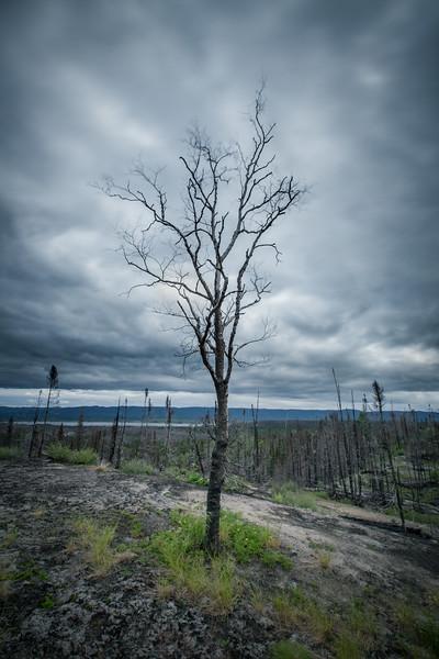 Burnt forest, Goose Bay, Labrador