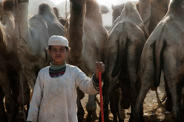 Young boy and his camels at the Birqash camel market.  Cairo, Egypt, 2010