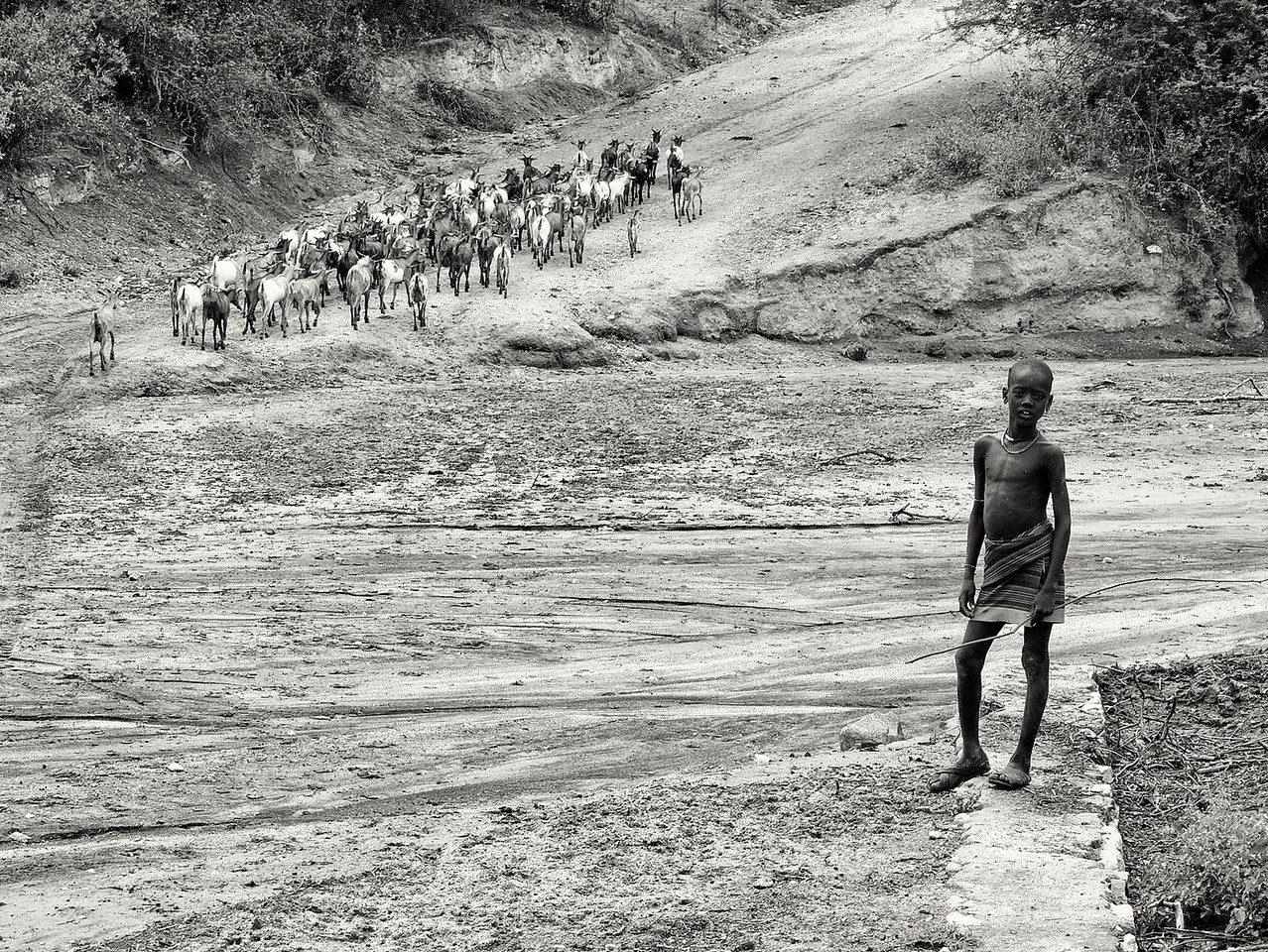 Young Hamar boy looks after his families goats. A families goats are there most treasured possession, supplying the family with nutrition and currency when needing to marry a child away.  <br /> <br /> Omo Valley, Southern Ethiopia, 2013.