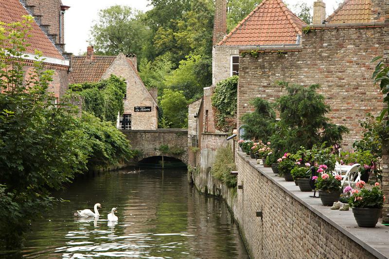 Brugge wild life