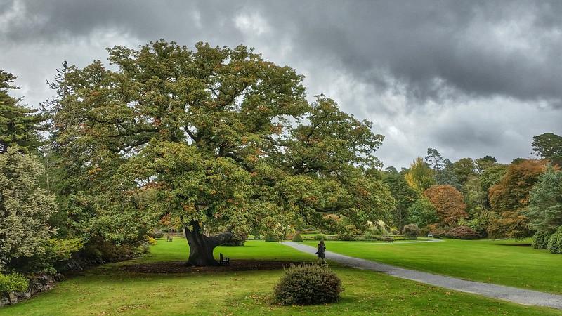 Muckross Gardens Killarney