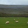 Walking the Burren Way
