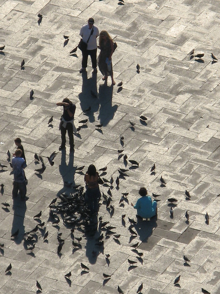 Pigeon People