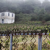 Foggy vineyard