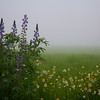 Fogged in Flowers