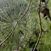 Spider web in early morning