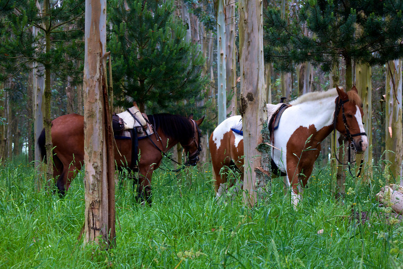 Horses take a break from the trail