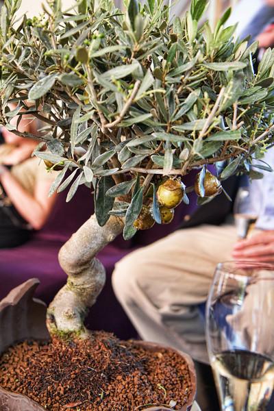 Caramelized Olives on tree