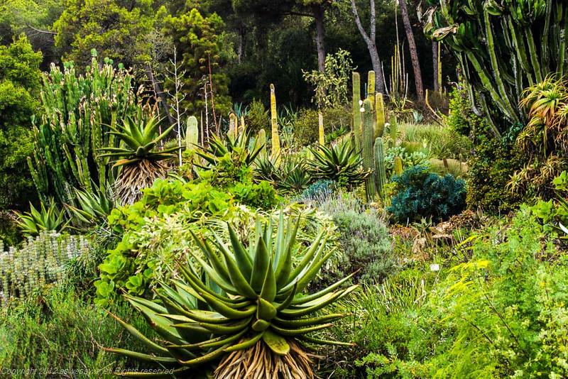 American cactus garden