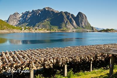 Fish heads drying, Reine, Lofoten Islands, Norway