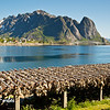 Fish heads drying, Reine, Lofoten Islands, Norway