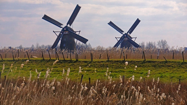 Holland countryside and windmills, #0677