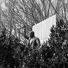 Exploring Teddy Roosevelt Island. Medium format. Tri-X. Mar 2019.