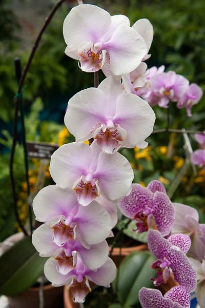 United States Botanical Garden, Washington DC. Orchid Symphony Exhibit, Mar 2014. Digital.