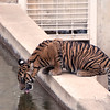 Smithsonian National Zoo. Digital, Dec 2013