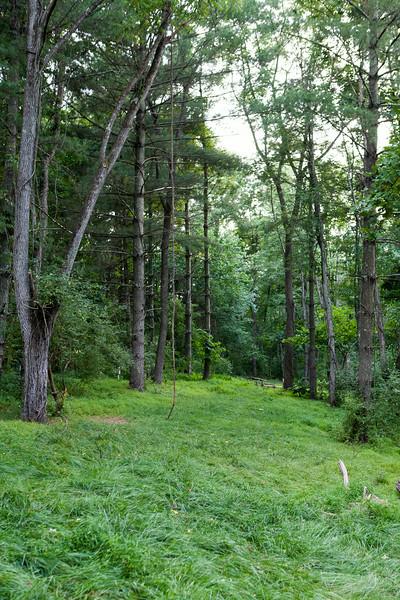 Hammock camping at Big Bend Campground, WV. July 2014, Digital.