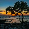 Hawaiian Sunset, #1469