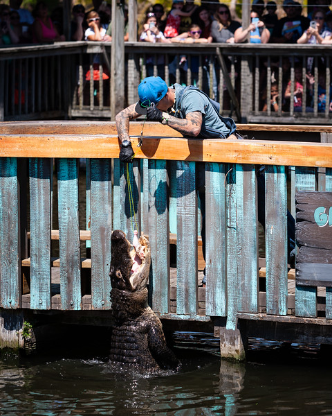 Gator Jumparoo at Gatorland. Digital. March 2019.