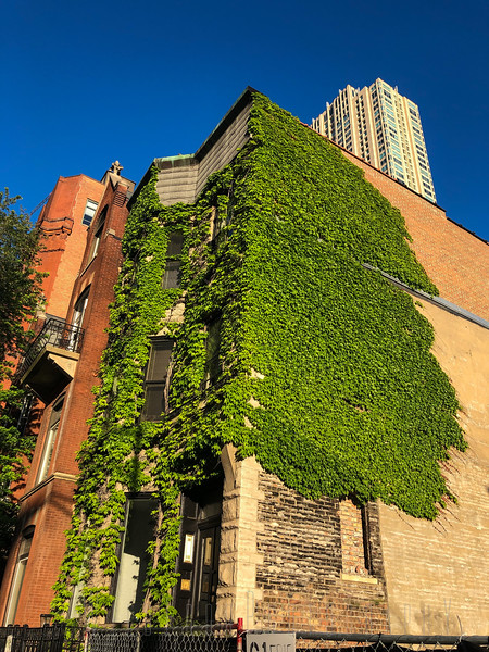Green House Chicago