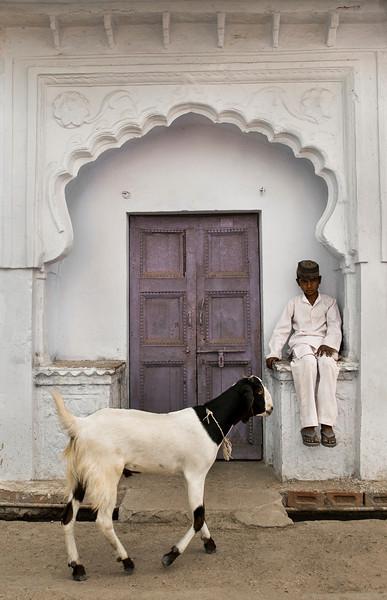 Muslim boy and goat in Bundi.<br /> <br /> Rajasthan, India, 2011.
