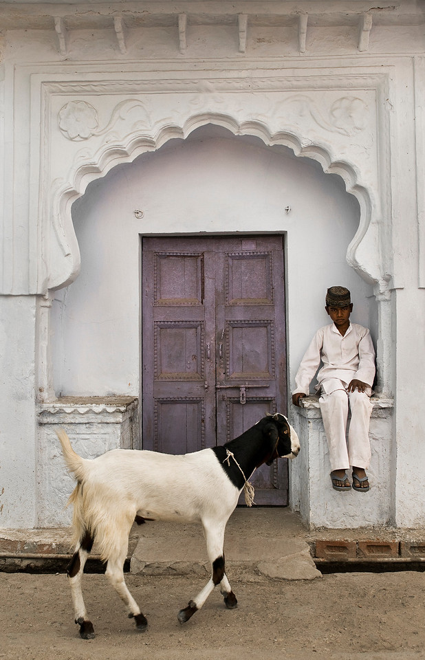 Muslim boy and goat in Bundi.<br /> <br /> Rajasthan, India, 2011.