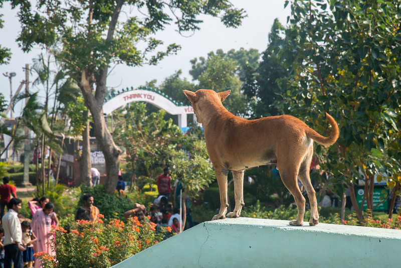 Dog keeps watch at Kailasagiri (కైలాసగిరి) - a hilltop park & garden well known for a huge Shiva statue (Kailash) & picturesque views of forest & sea. Visakhapatnam (Vizag), Andhra Pradesh, India.