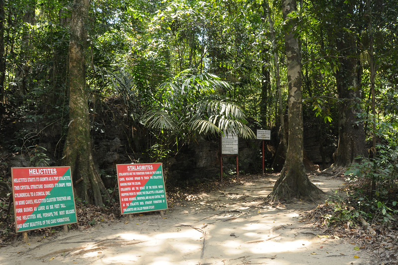 Helictites and Stalagmites at Natural Lime Stone Cave at Baratang, A&N, Andaman & Nicobar Islands, India.