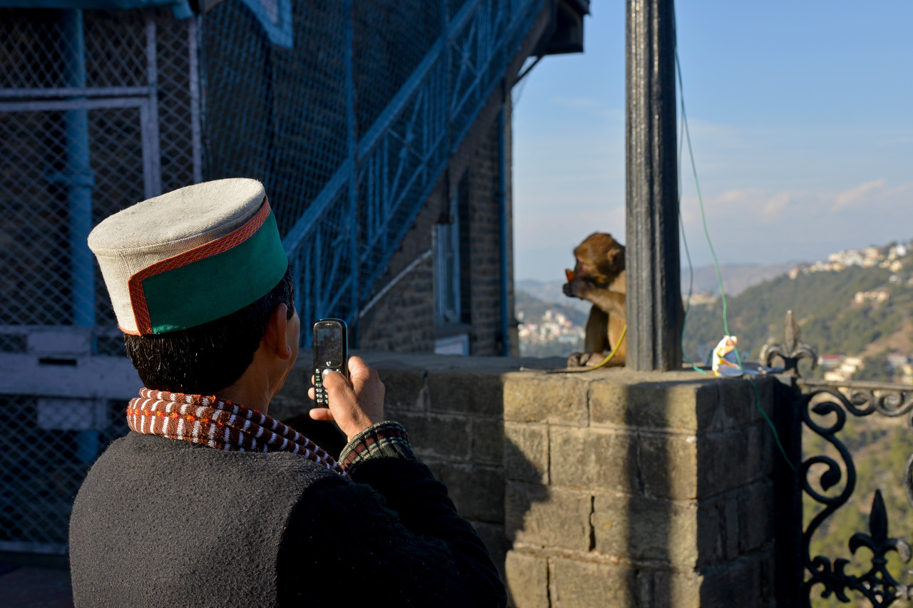 Monkeys have a field day. Not sure if he is taking a picture of the monkey or a selfie. :)<br /> Shimla is the capital city of the Indian state of Himachal Pradesh, located in northern India at an elevation of 7,200 ft. Due to its weather and view it attracts many tourists. It is also the former capital of the British Raj.