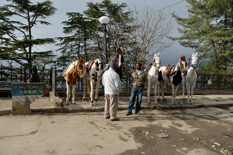 Horse riding is a popular recreation. Shimla is the capital city of the Indian state of Himachal Pradesh, located in northern India at an elevation of 7,200 ft. Due to its weather and view it attracts many tourists. It is also the former capital of the British Raj.