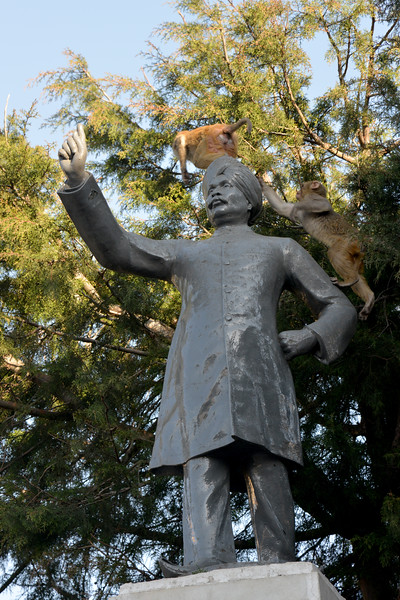 Monkeys jumping all over the statue of Lalalajpat Rai's statue. Shimla is the capital city of the Indian state of Himachal Pradesh, located in northern India at an elevation of 7,200 ft. Due to its weather and view it attracts many tourists. It is also the former capital of the British Raj.