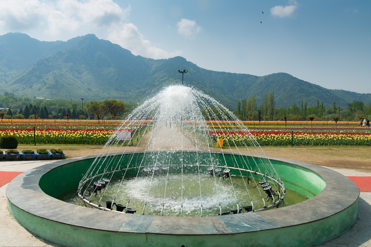 Fountain in Tulip Garden, Jammu and Kashmir, India. Asia's Largest, with 20 lakh tulips of 46 varieties spread over 30 hectares in the foothills of the snow-clad Zabarwan range.