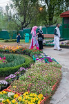 Local visitors at Tulip Garden, Jammu and Kashmir, India. Asia?s Largest, with 20 lakh tulips of 46 varieties spread over 30 hectares in the foothills of the snow-clad Zabarwan range.