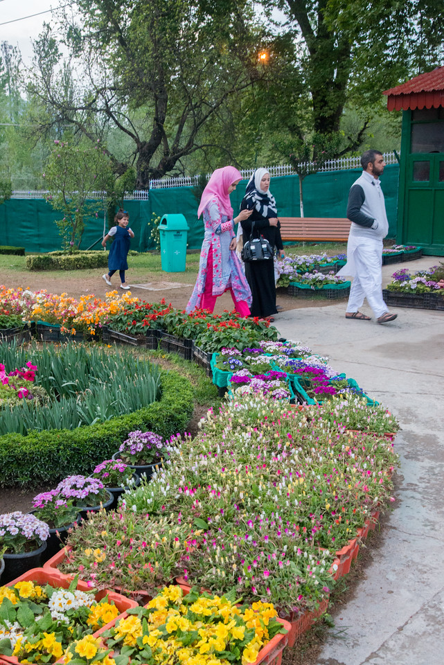 Local visitors at Tulip Garden, Jammu and Kashmir, India. Asia's Largest, with 20 lakh tulips of 46 varieties spread over 30 hectares in the foothills of the snow-clad Zabarwan range.