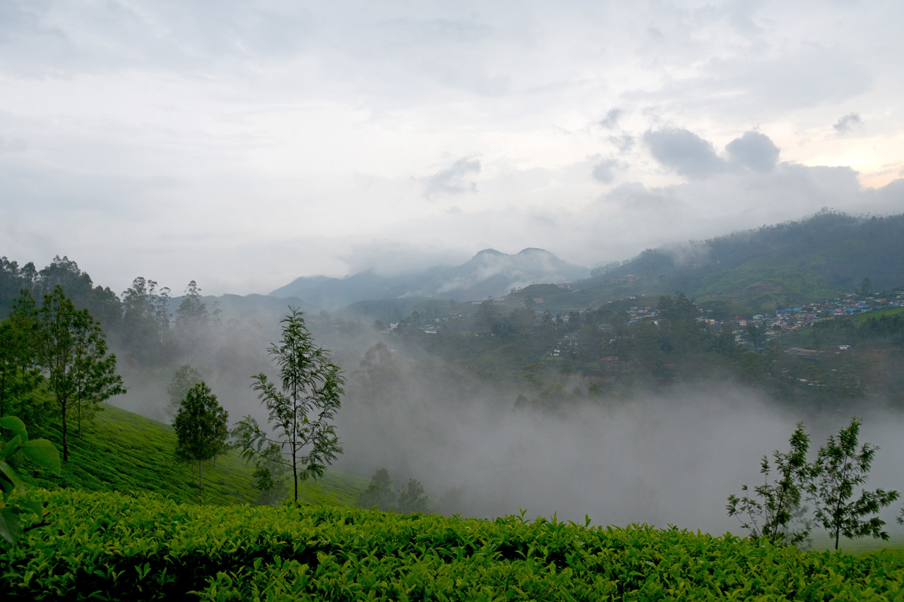 """Munnar is an attractive destination with the world's best and renowned tea estates. There are more than 50 tea estates in and around Munnar. Most of the plantations are taken over by the Tata Group. Some of the major tea estates in Munnar include Harrison Malayalam, AVT tea, Michael's tea, Brooke Bond etc. It is one of the biggest centers of tea trade in India. Tea or Chai is the most widely drunk beverage in the whole world. The tea plant, Camellia Sansis, is a cultivated variety of a Tea planttree that has its origins in an area between India and China. <br /> <br /> Munnar ( മുന്നാർ ) is situated on the Kannan Devan Hills ( KDH ) Village in Devikulam taluk. Munnar is a famous hill station on the Western Ghats of India. A range of mountains situated in the Idukki district of the Indian state of Kerala. The name Munnar means """"three rivers"""", referring to the town's strategic location at the confluence of the Madhurapuzha, Nallathanni and Kundaly rivers."""