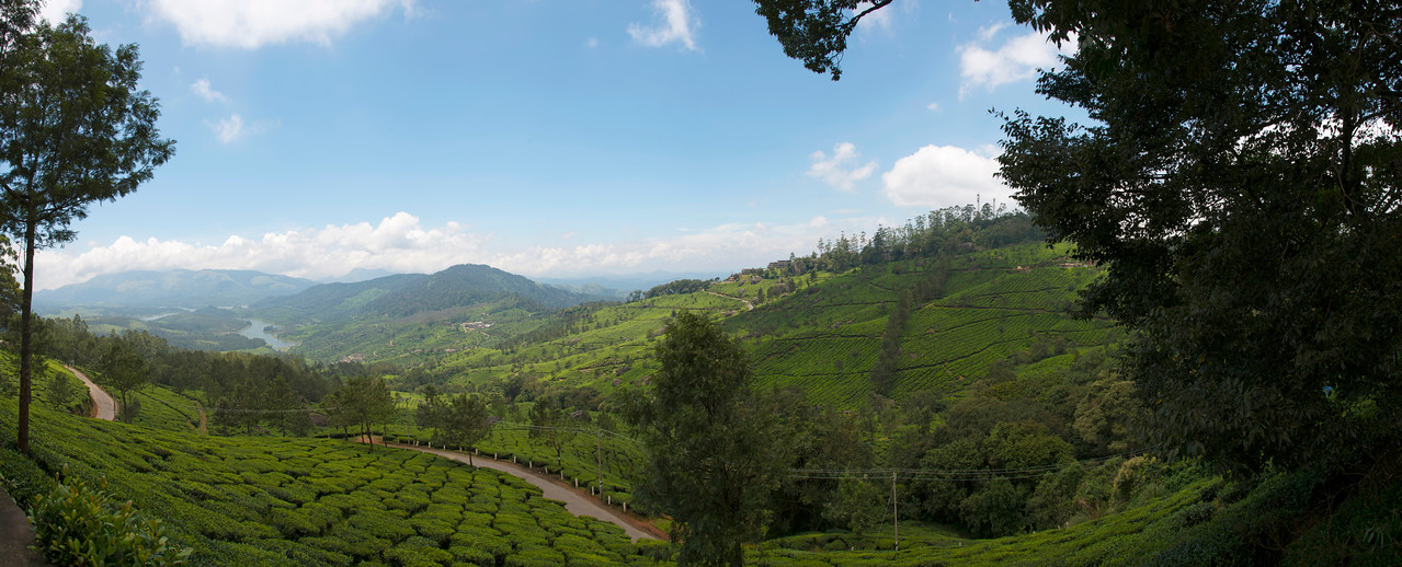 "Panoramic view at Munnar from Club Mahindra restort. Munnar is an attractive destination with the world's best and renowned tea estates. There are more than 50 tea estates in and around Munnar. Most of the plantations are taken over by the Tata Group. Some of the major tea estates in Munnar include Harrison Malayalam, AVT tea, Michael's tea, Brooke Bond etc. It is one of the biggest centers of tea trade in India. Tea or Chai is the most widely drunk beverage in the whole world. The tea plant, Camellia Sansis, is a cultivated variety of a Tea planttree that has its origins in an area between India and China. <br /> <br /> Munnar ( മുന്നാർ ) is situated on the Kannan Devan Hills ( KDH ) Village in Devikulam taluk. Munnar is a famous hill station on the Western Ghats of India. A range of mountains situated in the Idukki district of the Indian state of Kerala. The name Munnar means ""three rivers"", referring to the town's strategic location at the confluence of the Madhurapuzha, Nallathanni and Kundaly rivers."
