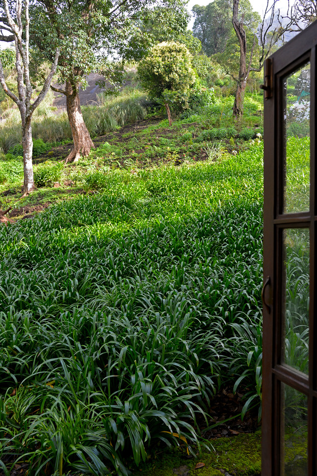 """View from the cottage. Club Mahindra Munnar, Lakeview.<br /> <br /> Munnar ( മുന്നാർ ) is situated on the Kannan Devan Hills ( KDH ) Village in Devikulam taluk. Munnar is a famous hill station on the Western Ghats of India. A range of mountains situated in the Idukki district of the Indian state of Kerala. The name Munnar means """"three rivers"""", referring to the town's strategic location at the confluence of the Madhurapuzha, Nallathanni and Kundaly rivers."""