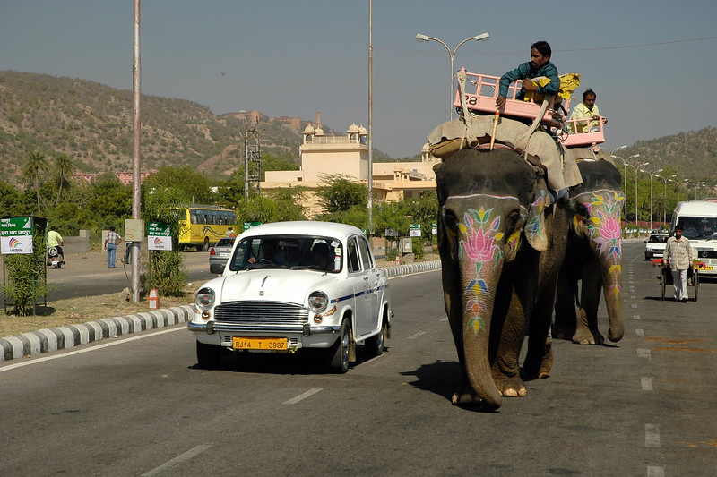 Various modes of transportation. Elephants, amabassador car, hand cart and even camels on the streets of Jaipur on the way to Amber Fort, Jaipur, RJ, Rajasthan, India.