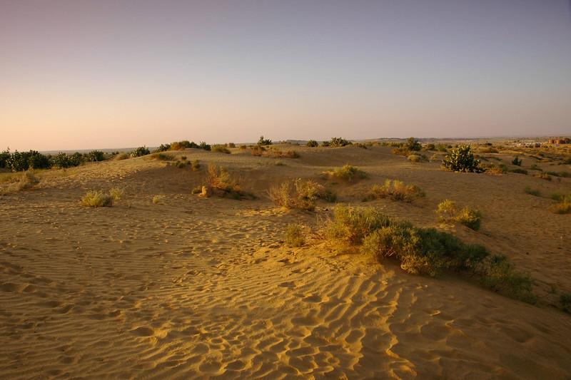 Wildlife in Sam sand dunes of Jaisalmer, Rajasthan, India.