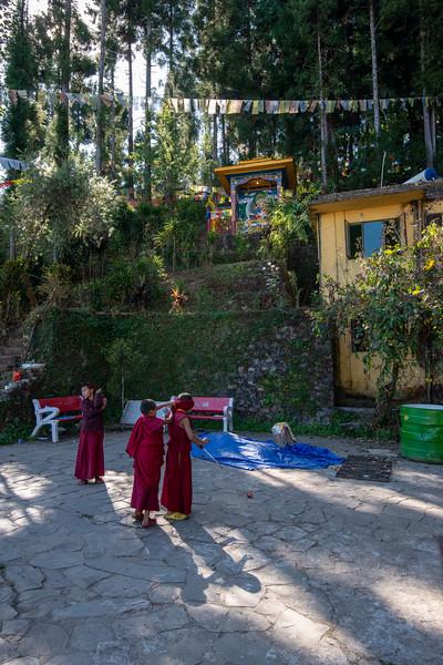 Young monks playing at the monstary/institute.<br /> <br /> Karma Shri Nalanda Institute (करमा श्री नालंदा इंस्टिट्यूट), Dharma Chakra Centre, Rumtek, Sikkim, North East India.