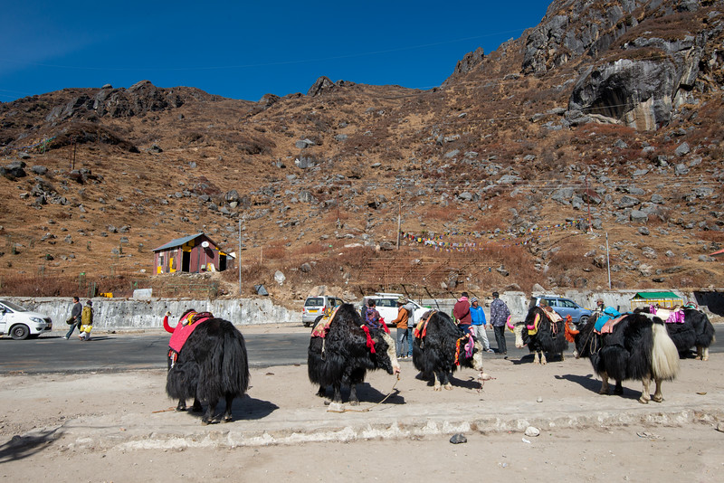 Yak ride at Tsomgo Lake (त्सोम्गो लेक). The Tsomgo lake at an altitude of over 10,000 ft is surrounded by mountains.