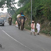 "Elephant Traffic, India   ,  <a href=""https://www.motoquesttours.com/guided-motorcycle-tour.php?india-himalayan-adventure-motorcycle-tours-19"">https://www.motoquesttours.com/guided-motorcycle-tour.php?india-himalayan-adventure-motorcycle-tours-19</a>"