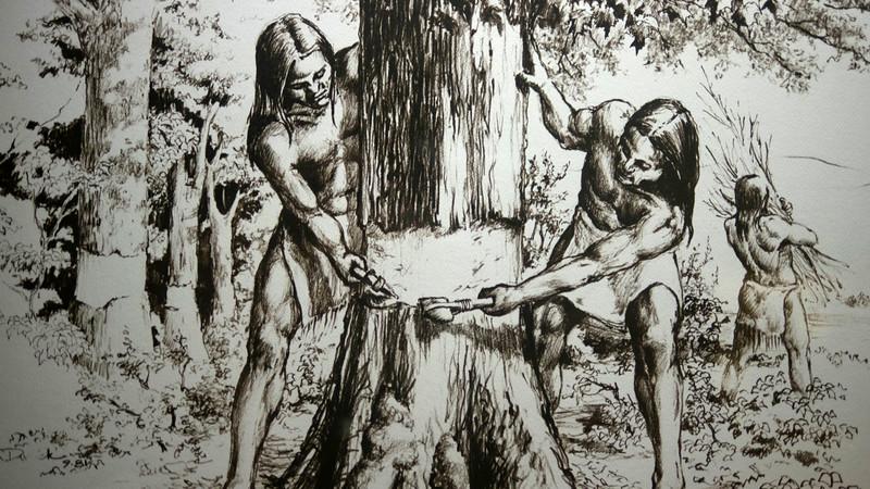 Girdling a tree