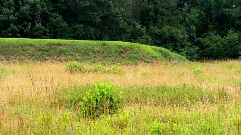 Cornfield Mound 2