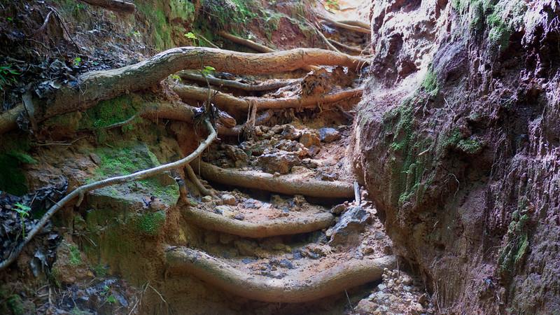 Root Stairway